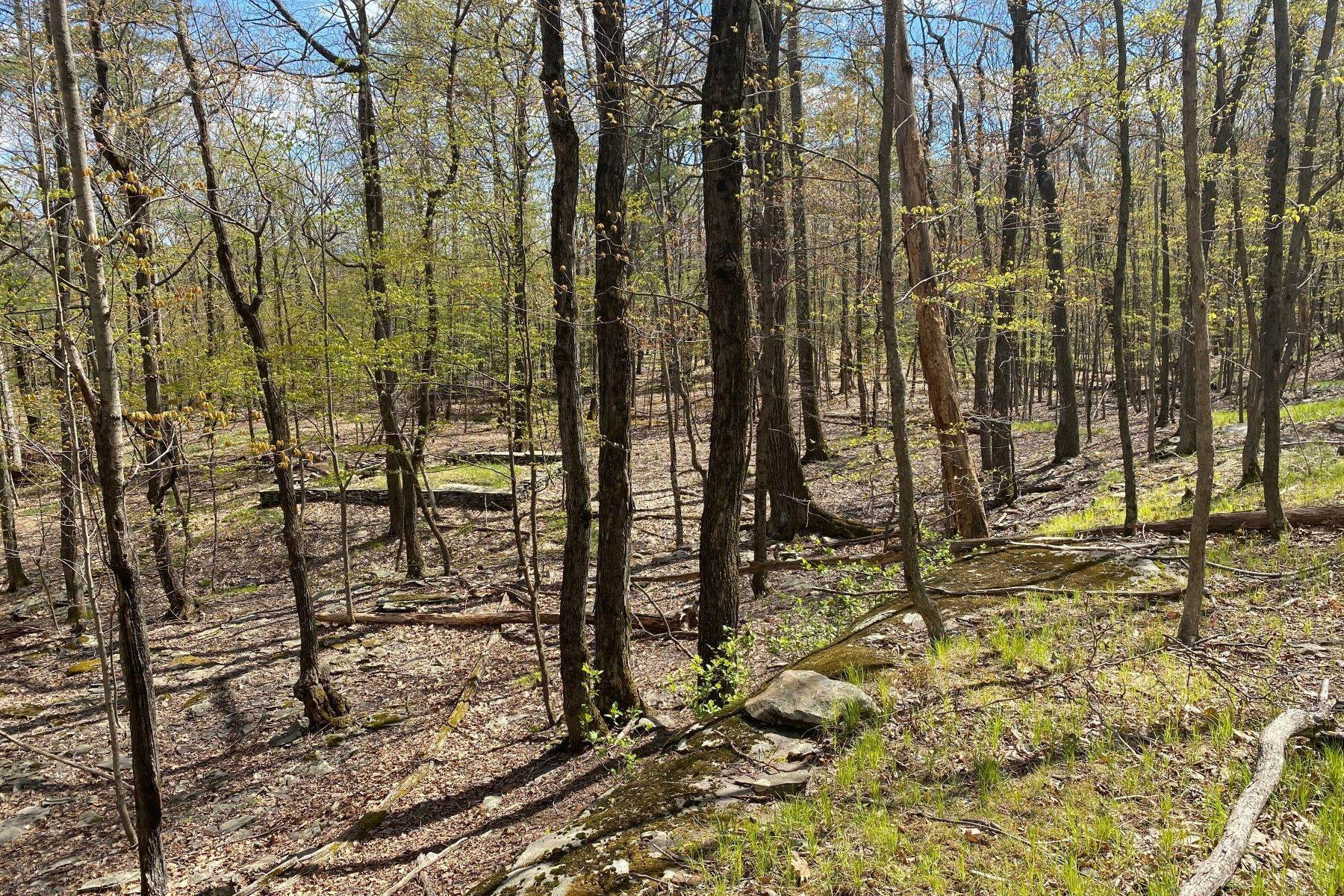 Land for Sale at Enchanting Forest Land TBD Lewis Hollow Road Woodstock, New York 12498 United States